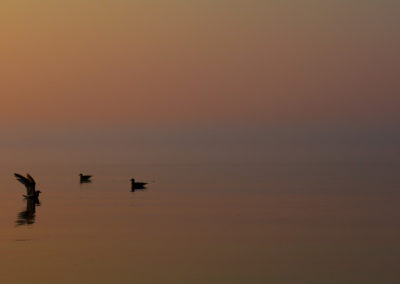 Gulls in Lake Superior #1